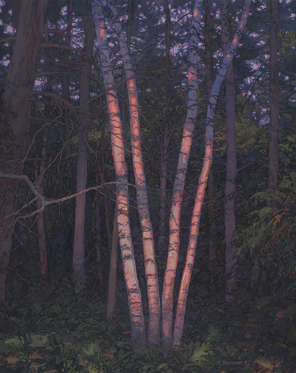 contemporary landscape oil painting of group of birches at Indian Point, Maine (Bar Harbor/Mt Desert Island)