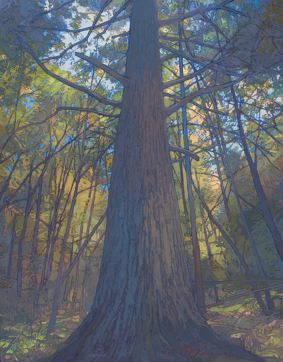 contemporary landscape oil painting of old growth tree in Adirondack Park, owned by US Department of State