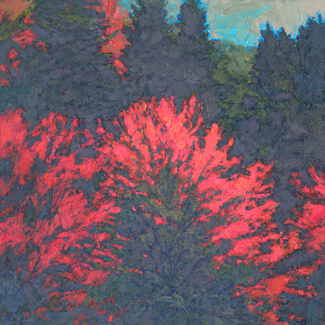 small contemporary landscape oil painting of fall maple trees